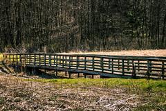 Wooden Bridge_ (david_sharo) Tags: bridge field canon moraine t5i davidsharo