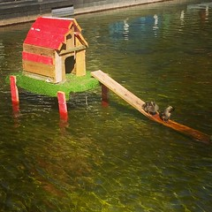 Coincoin's corner #canard #duck #maison #home