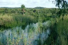 Bool Creek, Great Sandy National Park, Fraser Island, Qld., February, 1989. (garratt3) Tags: film creek pentax australia qld queensland kodachrome aus billabong fraserisland greatsandynationalpark