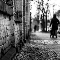 Morgenspaziergang (stephanboblest) Tags: light blackandwhite bw sun sunlight berlin wall canon walk natur monochrom sonne lightandshadow bnw mauer spaziergang sonnenlicht tiefenschrfe schwarzweis fusgnger fusweg