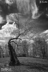 Weathered- April 26, 2016 (zachary.locks) Tags: park old blackandwhite tree spring state meadow resort spooky falling wv willow westvirginia weathered stonewall bent decrepit twisted apart whomping cy365 zlocks