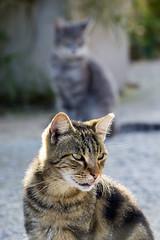 (sarahpadoan) Tags: street light italy cats beautiful beauty cat nikon italia sweet gatti lightness chioggia veneto sottomarina catlovers randagi 55300mm nikontop sarahpadoanphotography