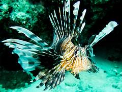 IMG_0807 (eye[4]eye) Tags: egypt diving gypten tauchen bluewaves