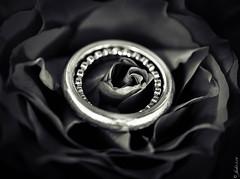 DSC_1021 (La Marquise de Jade) Tags: flower love monochrome rose noir noiretblanc lovers ring amour mariage fiancailles blanc amoureux relation bangue