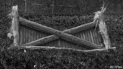 The Obstacle (KF-Photo) Tags: 169 pferde barriere schilf tbingen hindernis oxer pfrondorf grasflche kreuzlinie pferdeparkour samyanga1485