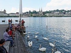 Lucerne 07 (mpetr1960) Tags: city people lake building water switzerland duck swan nikon europe cityscape outdoor eu swans lucerne embankment cityview d800 nikond800