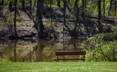 sit and stay a while (Dotsy McCurly) Tags: trees green nature water beautiful grass reflections reflecting spring pond nikon dof peaceful sit d750 while local stay