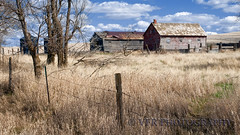 Silent watch on the verge of Spring (VFR Photography) Tags: wood abandoned grass rural fence landscape landscapes countryside wooden unitedstates post decay country fences frame northdakota nd barbedwire april weathered fencing grasses homestead agriculture posts barbwire decaying agricultural earlyspring homesteads greatplains northernplains goldenvalleycounty peacegardenstate sentinelbutte
