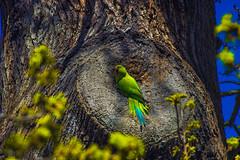 Hey you! (Domenico Cirillo) Tags: park wild sunlight tree bird london nature colors closeup canon eos spring richmond londres londra t3i 600d efs55250mmisii desdomos