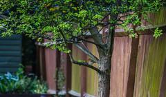 Spot the Birdie (Sally Dunford) Tags: robin britishbirds canon70200mm gardenbird spotthebirdie canon7d sallyapril2016