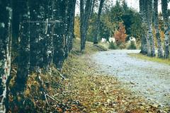 Tonos de otoo  -  Nueva Braunau (Patagonia -Chile) (Noelegroj (More than 6 Million views.Thank you all) Tags: chile road autumn trees patagonia naturaleza nature colors season landscape arboles camino path paisaje colores otoo