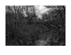 Spring landscape, small urban creek (Richard C. Johnson: AKA fishwrapcomix) Tags: trees bw water minnesota creek landscape blackwhite spring midwest duluth 18mm endofempire fujixpro1 paxamericanus