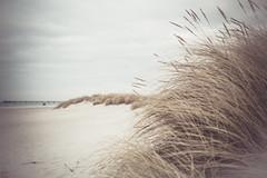 Strand (Margot in Love) Tags: dog beach strand deutschland pug bank balticsea hund ostsee prerow parker puggle mecklenburgvorpommern