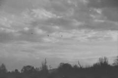 three (pumobelix) Tags: blackandwhite birds clouds foma caffenol fomapan fomacreative