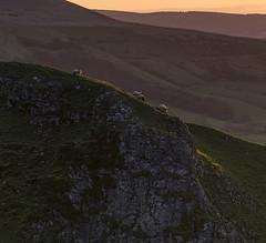 Surefooted (l4ts) Tags: sunrise landscape sheep derbyshire peakdistrict limestone goldenhour whitepeak mamtor winnatspass hopevalley britnatparks