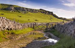 The field gate (Joe Dunckley) Tags: uk england reflection landscape puddle gate track path yorkshire hill karst northyorkshire yorkshiredales crag penyghent