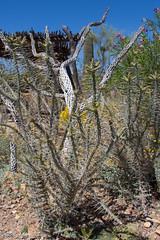 IMG_2963.jpg (ashleyrm) Tags: travel arizona museum sonora desert tucson tucsonarizona