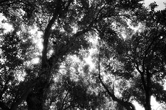 (Sarah N.Taft) Tags: blackandwhite paradise infrared ilfordsfx redfilter princeville kauaihawaii filmisnotdead