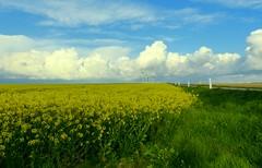 yellow white green blue wind (KerKaya) Tags: road leica flowers blue light sky white france green nature field grass yellow clouds landscape wind panasonic normandy windturbine fz200 kerkaya