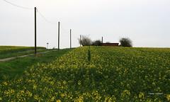 08-IMG_9902 (hemingwayfoto) Tags: energie landwirtschaft feld gelb blte raps weg blhen telegrafenmast bruchriede