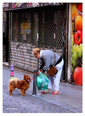 Mirada canina (Imati) Tags: madrid calle perro mirada seora frutera canoneos6d