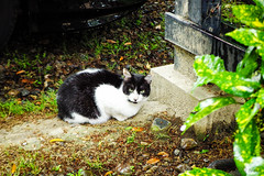 Today's Cat@2016-04-28 (masatsu) Tags: cat pentax catspotting mx1 thebiggestgroupwithonlycats