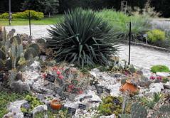The botanical garden in Balchik, Bulgaria (Stella VM) Tags: flowers cactus plants flower garden botanical bulgaria bulgarian balchik