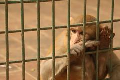 Prison Life - I (Rafee Mizan Khan Chowdhury Niloy) Tags: people nature canon garden botanical zoo wildlife photowalk dhaka mirpur 70d