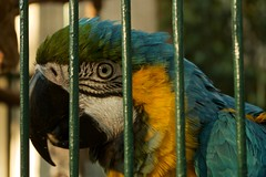 What does the caged bird see? (Maggie McGunigle) Tags: color bird beautiful colorful sad outdoor parrot indoor caged