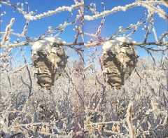 Monique spotted a beautiful bee hive this morning in the river valley. (JOHN . T) Tags: stereoscopic 3d d stereo3d stereoviews 3dphotos 3dcontent poppy3d wpoppy3