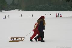 Winter (Natali Antonovich) Tags: christmas winter friends portrait snow childhood children frost belgium belgique belgie tradition sled sleding sledging lahulpe christmasholidays