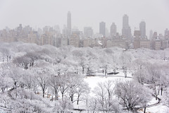 Morning Snow (PKessel) Tags: snow centralpark fifthave