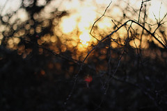 the scariest moment is always just before you start (annkathrinxx) Tags: sunset nature canon germany eos 50mm december bokeh 18 rheinlandpfalz raspberrysorbet rhinelandpalatinate 700d annkathrinxx