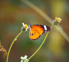 One of nature's beautiful creation. (WandererSana) Tags: travel india green nature butterfly garden photography niceshot outdoor delhi sony explore greenery dslr photooftheday picoftheday bestshot naturelover travelphotography naturesbeauty wildlifephotography sonyalpha sonydslr lovetotakepictures