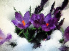 2016-01-20 blurred snowscape  (6) (april-mo) Tags: blur flower art experimental purple blurred crocus flou winterscape springflower experimentaltechnique blurredwinterscape blurredsnowscape