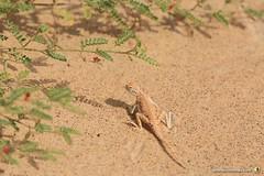 3-Oman-Desert-Marathon-Day-6_3209