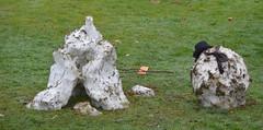 Melting snowmen winter snow (dennoir) Tags: winter snow melting snowmen