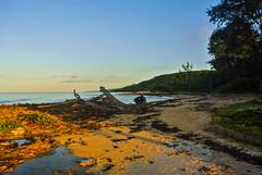 Last sun rays (Kat-i) Tags: blue trees sunset sky beach water strand sand wasser sonnenuntergang himmel blau kati bume kuba katharina caribbeansea karibik nikon1v1
