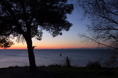 Debeli rtič (GregaKapun) Tags: winter sunset beach silhouette pine slovenia cape slovenija sunsetlight zima rt adriatic adriaticsea istria jadran bor silhueta istra obala primorska istrianpeninsula sončnizahod debelirtič gulfoftrieste canoneos60d jadranskomorje sigma1750mmf28exdcos slovenianlittoral tržaškizaliv istrskipolotok