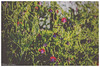 (Palermo Finestra sul Mondo) Tags: travel flowers trees girls friends sea wild sky panorama plants dog moon white black flower macro tree nature colors girl fruits animal cane architecture alberi travels nikon mare natura cielo fiori fiore albero amici turismo frutta colori viaggi bianco nero viaggio architettura animali sicilia ragazza pianta turism ragazze sciacca allaperto