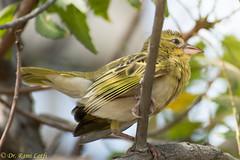 Beauty.. (dr.lotfi) Tags: bird nature birds nikon saudi jeddah tamron