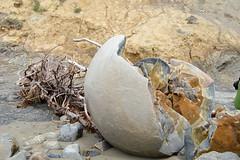 New Zealand, South Island (Nev Buchanan) Tags: coast seaside waikiki outdoor otago concretions ozandnz2015