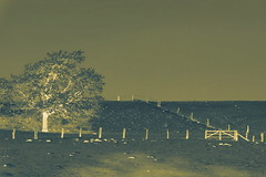 Negativ (Don Bello Photography) Tags: winter licht weide baum negativ 1000views norddeutschland niedersachsen 2016 northerngermany lichtundschatten 2000views acdsee 3000views dnenhof 4000views weidenzaun lumixphotographer donbello panasonicphotographer cuxhavenberensch reinhardbellmann panasonicfz1000 lumixfz1000 donbellophotography acdseeultimate9