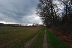 Threatening Sky (hub en gerie) Tags: trees sky netherlands field rural landscape bomen path pad nederland lucht achterhoek winterswijk landschap gelderland landelijk woold guelders platinumpeaceaward