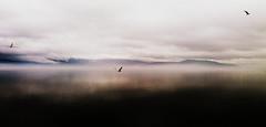 * (PattyK.) Tags: winter mist lake bird lakeside greece february griechenland whereilive ilovephotography 2016 ioannina ilovemycity giannena epirus bythelake  ipiros  pamvotida     lakepamvotida ioanninalake   samsungj5