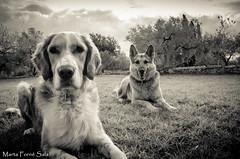Models de 4 potes (Marta Forn (Llum66)) Tags: perros gossos