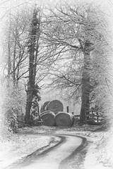 (martine_ferron) Tags: hiver neige chemin foin roundballer