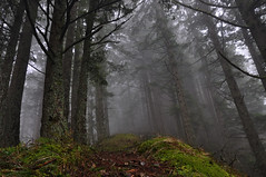 Mount Defiance in the Columbia River Gorge (ingridfreaney) Tags: trees winter fog oregon forest river moss pacific northwest columbia trail gorge pnw