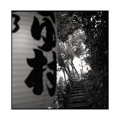 path  kyoto, kansai  2015 (lem's) Tags: japan rolleiflex forest kyoto path steps lantern kansai foret japon chemin lampion planar marches