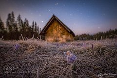Frozen Crocus. (ElginCon) Tags: park old flowers sky mountains flower nature beautiful beauty night garden stars landscape photography landscapes frozen spring flora nikon nightscape purple cottage poland polska crocus national mystic dolina clearing krokus tatra 10mm narodowy samyang 500px chochoowska tatrzaski d7200 ifttt earthporn